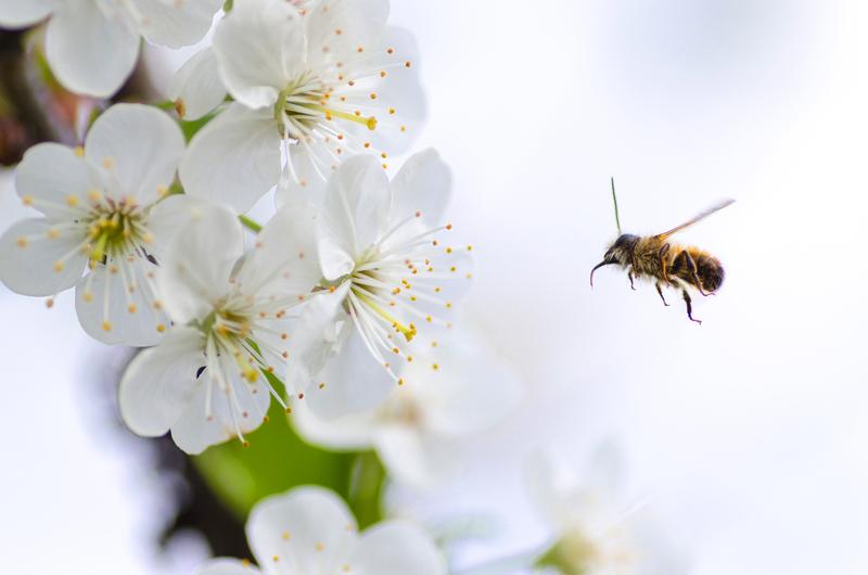 ミツバチが花にいる様子